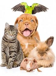 Companion & Small Animals